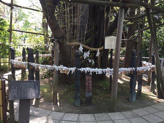 Inage Shrine: 御神木の大銀杏と十二支めぐりのブロンズ像