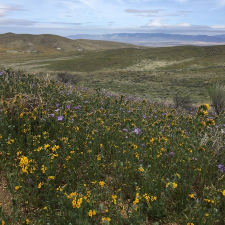 Antelope Valley California Poppy Reserve: photo0.jpg