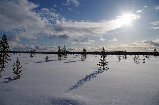 Svanvik, Norway: Arctic Tundra