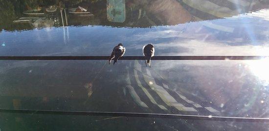 Crackenback, Avustralya: Outside the restaurant windows
