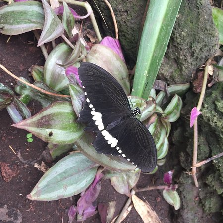 Casa delle Farfalle: photo0.jpg