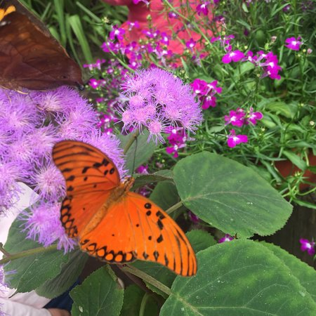 Casa delle Farfalle: photo2.jpg