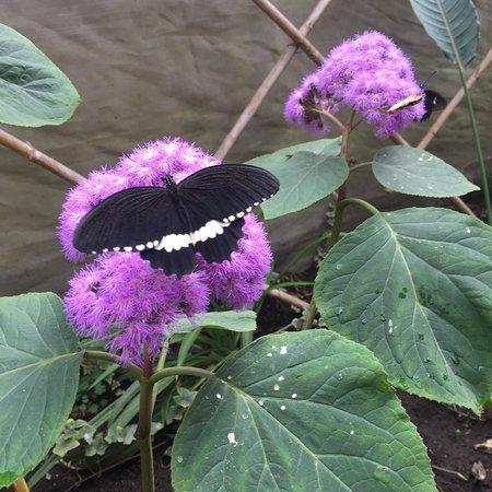 Casa delle Farfalle: photo3.jpg