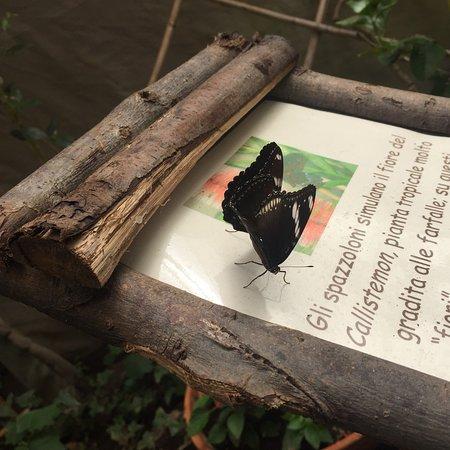 Casa delle Farfalle: photo4.jpg