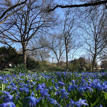 حديقة لويس بارك بـ مانهايم: photo4.jpg