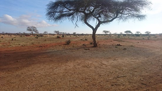 Amazing safari with Costo Tours