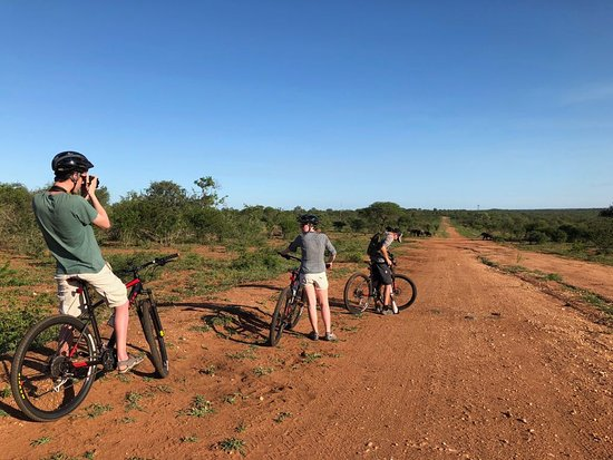 Hoedspruit, Afrika Selatan: Riders viewing wild elephants from a safe distant