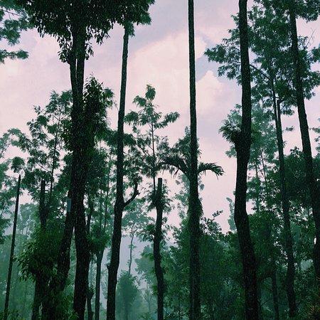 Kaivalyam Retreat : photo6.jpg
