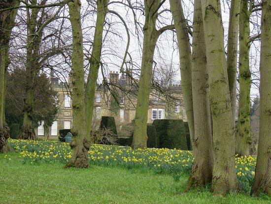 Renishaw, UK: Daffodils - looking towards the House