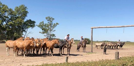 Los Cardales, Argentinien: Amazing control of horses