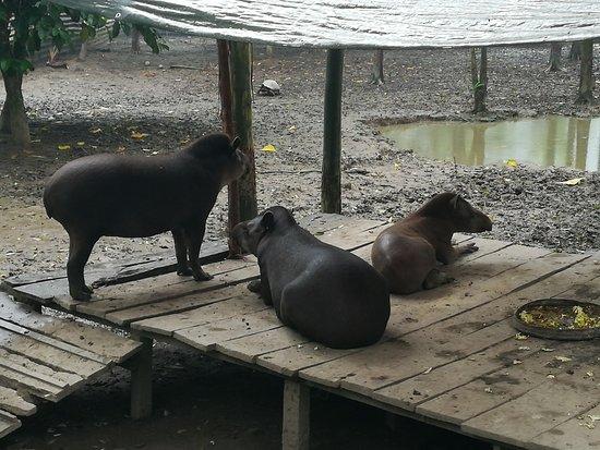 La Jungla Ecolodge: Olvide el nombre de estos lindos animalitos...