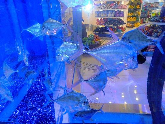 The Dubai Mall: живые рыбки в витрине