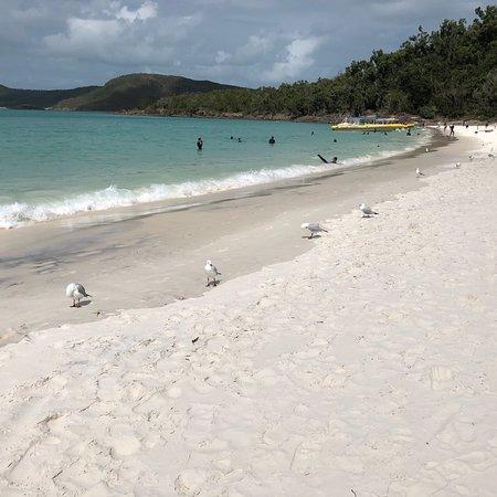 Whitehaven Beach: photo1.jpg