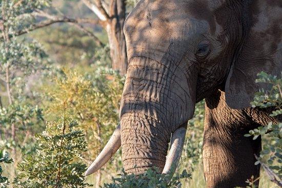 Welgevonden Game Reserve, South Africa: Elephant