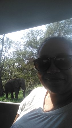 Kruger National Park, Sydafrika: Elephants!!! I love Elephants!!