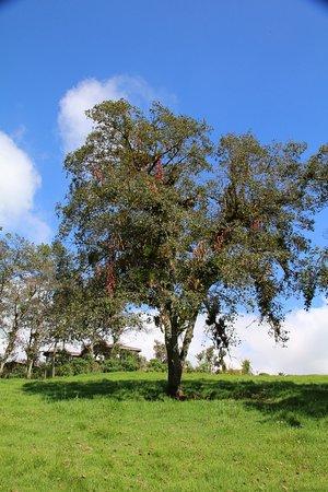 Tambillo, Ecuador: The surrounding trees.