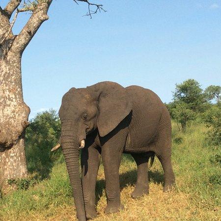 Bushwise Safaris: photo5.jpg