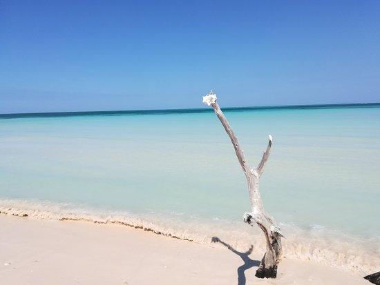 Cayo Jutia Beach: IMG_20180327_111319_large.jpg