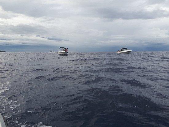 Tamarin Bay: 20180405_075334_large.jpg