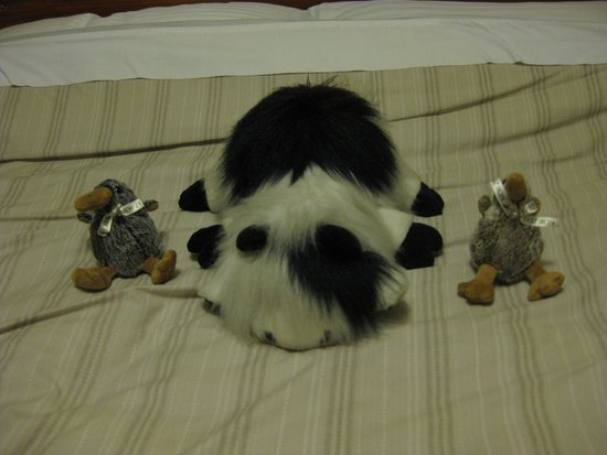 "Murchison, Selandia Baru: The ""lazy cow"" makes friends with our Kiwi bird mascots!"