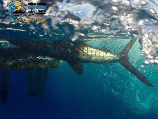 Puerto Quetzal, Guatemala: Underwater shot!