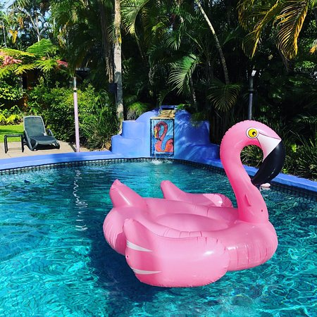 Pink Flamingo: photo0.jpg