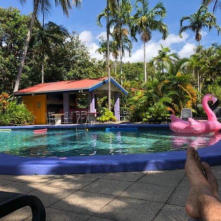 Pink Flamingo: photo3.jpg