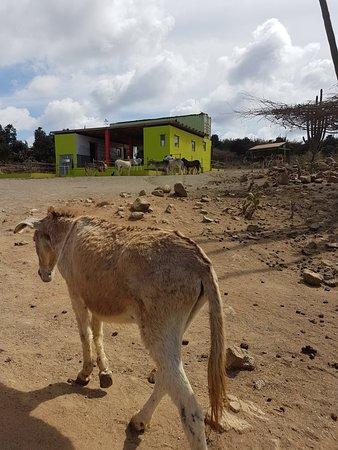 Donkey Sanctuary Aruba...