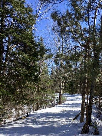 Spruce Bog Boardwalk Trail: Trail