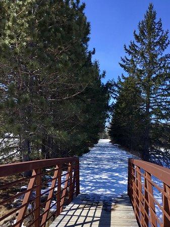 Spruce Bog Boardwalk Trail: Bridge