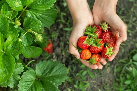Strawberry Picking and Nami Island & More