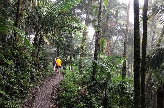 サンフアンからエルユンケ国立熱帯雨林のプライベートツアー