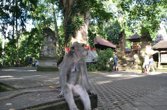 Ubud Monkey Forest and Rice Terrace...