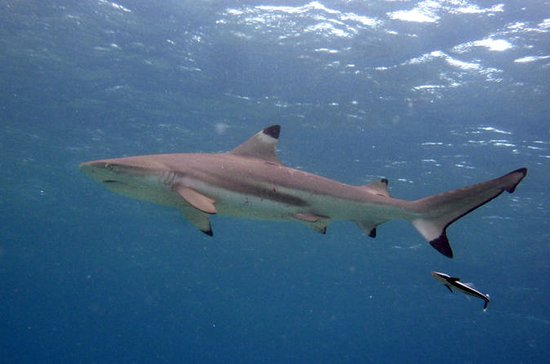 Phi Phi Island Eco Tours - Morning Shark Snorkelling