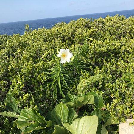 East Henna Cape : photo1.jpg