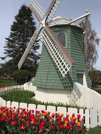Roozengaarde Display Garden: Welcome To Holland!