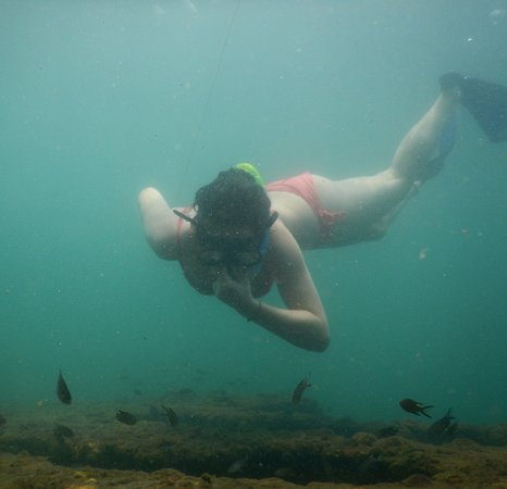 Flying Fish: Enjoy Free Snorkelling in all our Packages, Seek the Adventure experience the THRILL