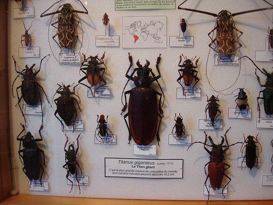 Tourrette-Levens, Prancis: Les insectes
