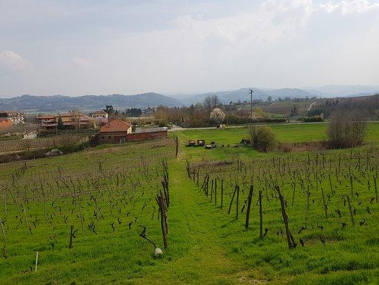 Strevi, إيطاليا: la vista