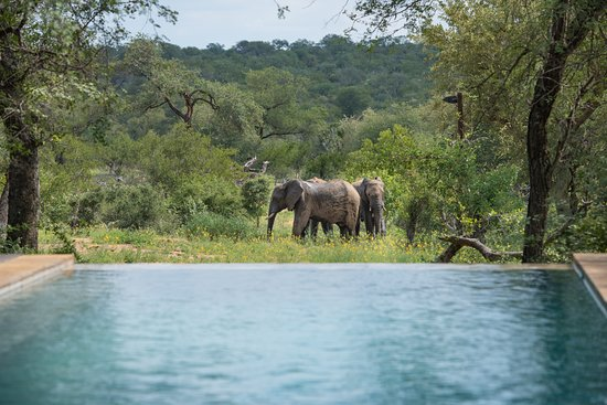 Toro Yaka Bush Lodge: The view of our waterhole from the pool.