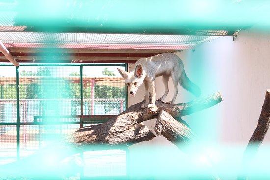 Rak Zoo