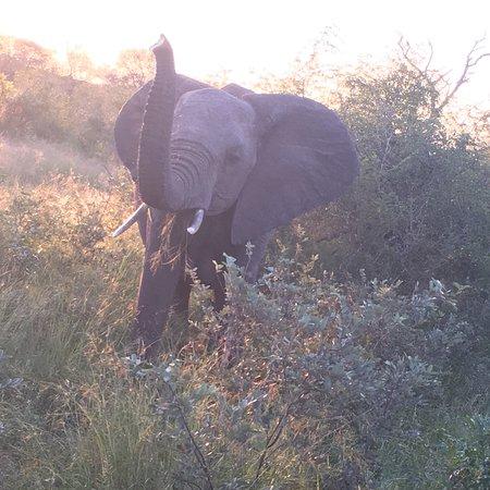 Lukimbi Safari Lodge: photo1.jpg