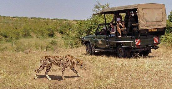 Mervin Safari Tours