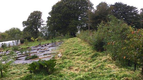 Forest Garden Wales: getlstd_property_photo