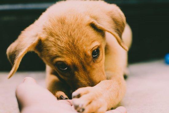 Dog Friendly Restaurants in Burlington, VT - Bring Fido