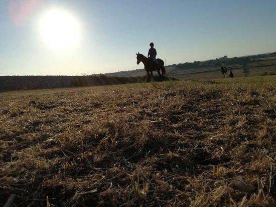 Cavalli & Cavalieri A.S.D
