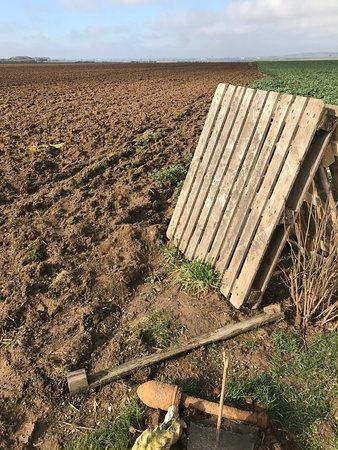 West-Vlaanderen, België: WWI shells still get plowed up today