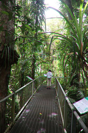 Daintree Discovery Centre: The middle boardwalk