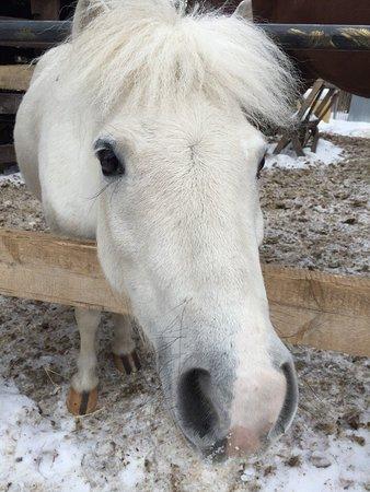 Golitsyno, Rosja: конюшня