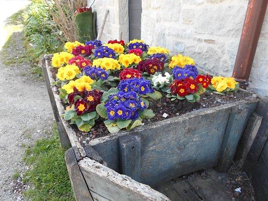 Vergato, Italien: fiori all'entrata